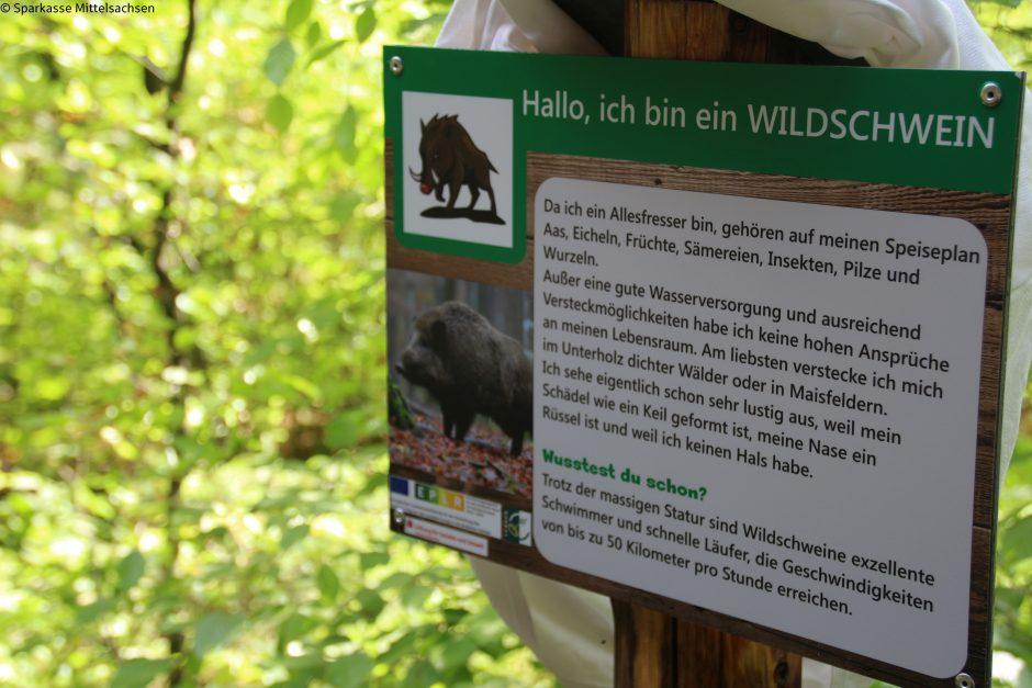Den Tieren des Waldes auf der Spur: Förderung für Naturlehrpfade