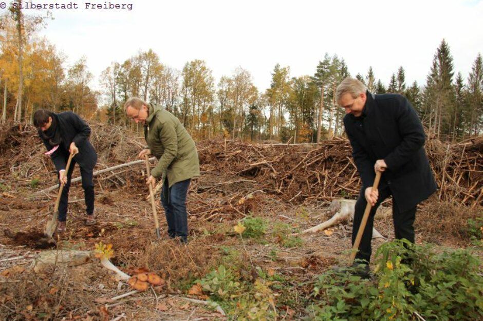 Neue Bäume für den Freiberger Stadtwald.